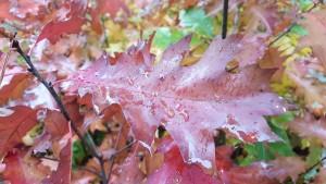 Żółty jesienny liść 1